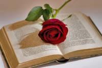 imagen libro y flor